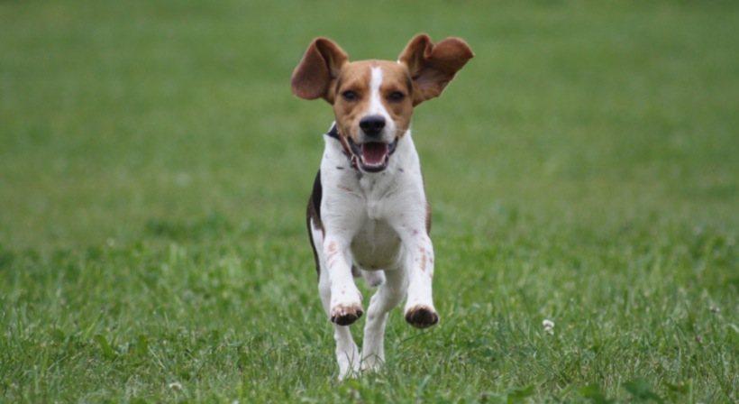 Fermiamo le deportazioni dei cani di Green Hill