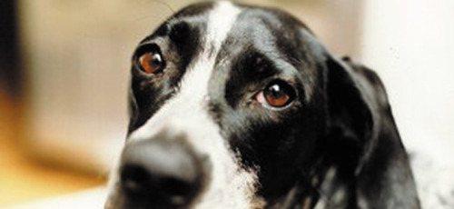 Il Parlamento Europeo a favore della Vivisezione anche sui randagi