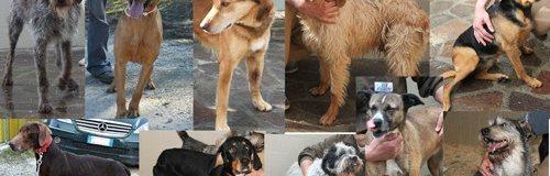 Adotta uno dei 50 cani sepolti vivi nella neve