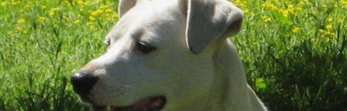 Napoli: aiutiamo i cani della città