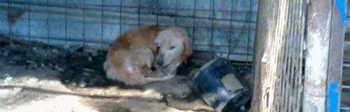 Le guardie zoofile Oipa di Roma in aiuto dei cani maltrattati