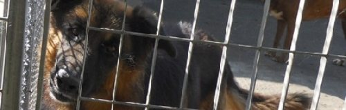 Un aiuto per salvare gli animali maltrattati a Casali Ussita